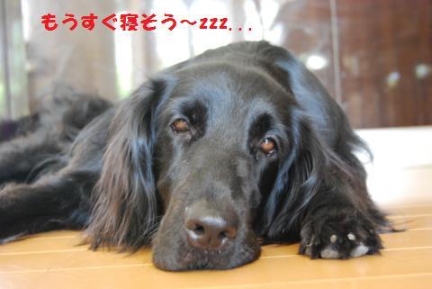 024_convert_20100730190333.jpg