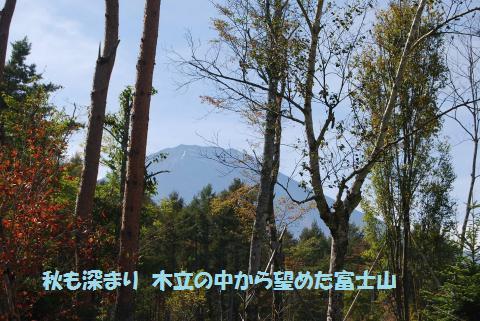 030_convert_20101024091455.jpg