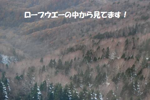 169_convert_20101109195520.jpg