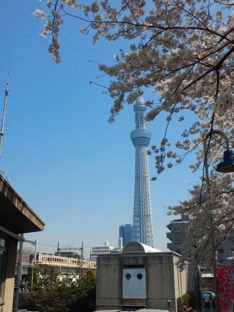 新東京タワー、スカイツリーと桜と時々電車。