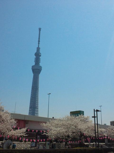 空と桜はいいコントラスト