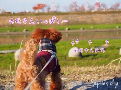 20141212084612da9.jpg