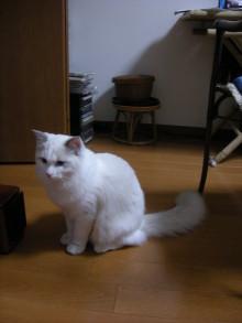 徒然青空日和-子猫?