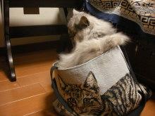 徒然青空日和-猫バッグ