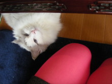 徒然青空日和-エロ猫