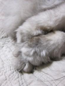 徒然青空日和-猫の手