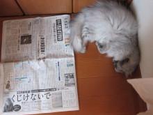 徒然青空日和-新聞