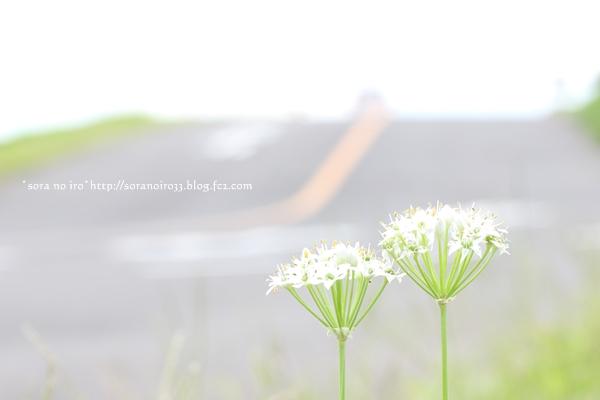 whitelace9522.jpg