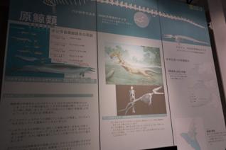 DSC01032-3.jpg