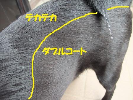 2010_0606_2.jpg