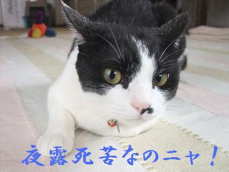 2010_0623_2.jpg