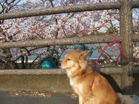 2012_0405_fuku_1.jpg