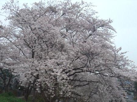 2012_0411_1.jpg