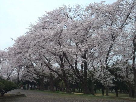2012_0411_2.jpg