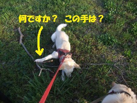 2012_0412_8.jpg