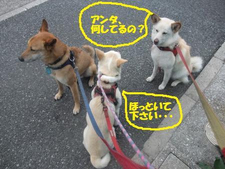 2012_0413_2.jpg