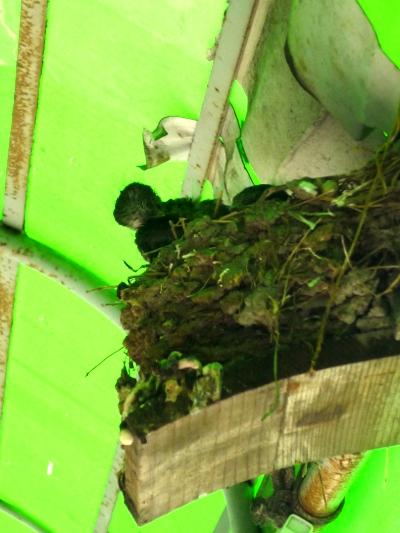 燕の巣その1