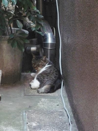 2013年東京‐猫