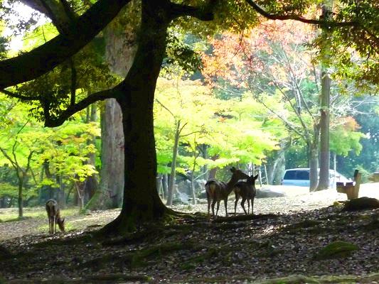奈良公園‐鹿その2