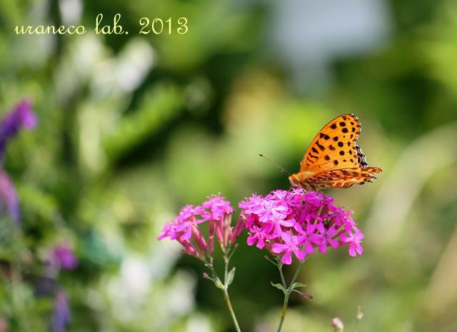 6月3日初夏の蝶