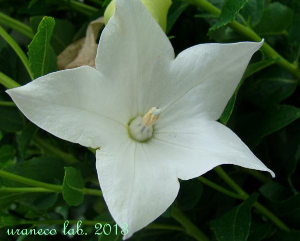 6月11日white star