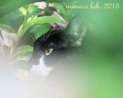 6月19日緑の陰の白黒もふ