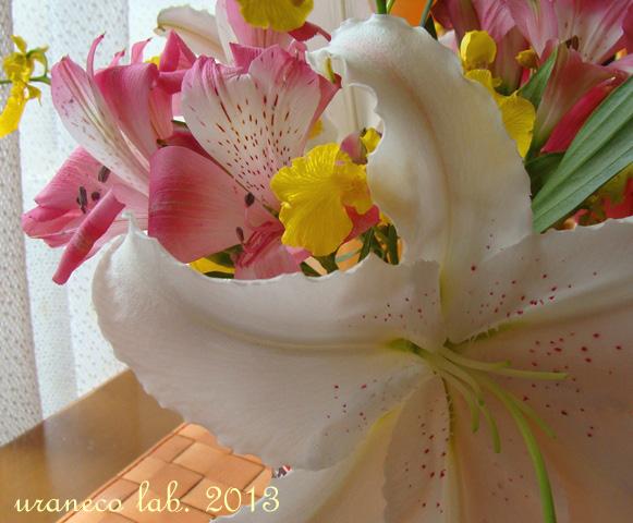 6月17日花のある窓辺