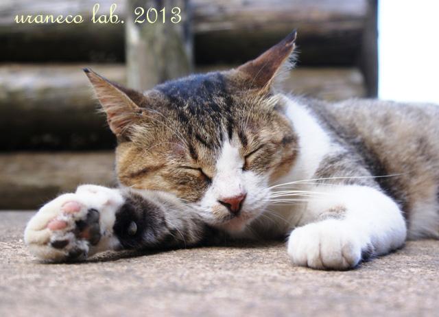 7月21日江の島猫旦那版3