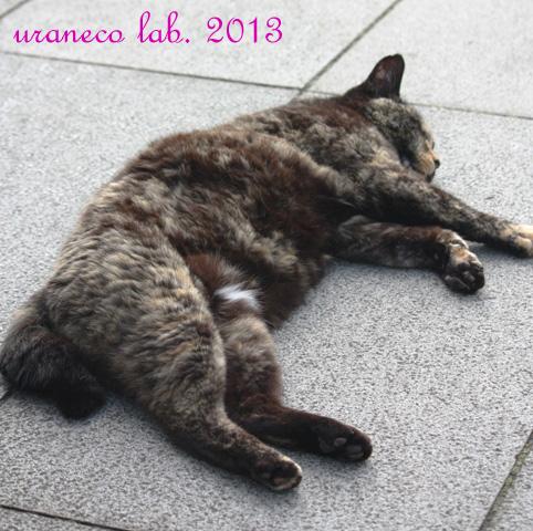 7月22日江の島の猫