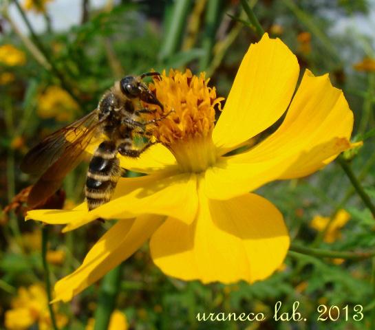 8月16日お仕事中の蜂