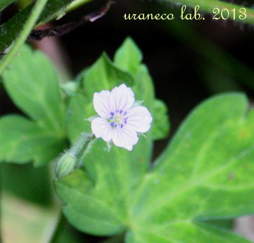 8月20日山の花4