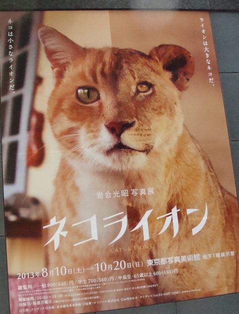 9月23日ネコライオン展