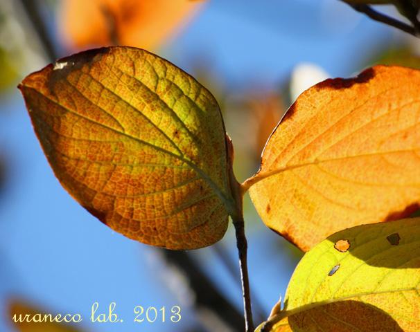 10月4日色づく葉っぱ