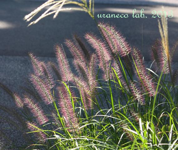 10月18日紫色のブラシ