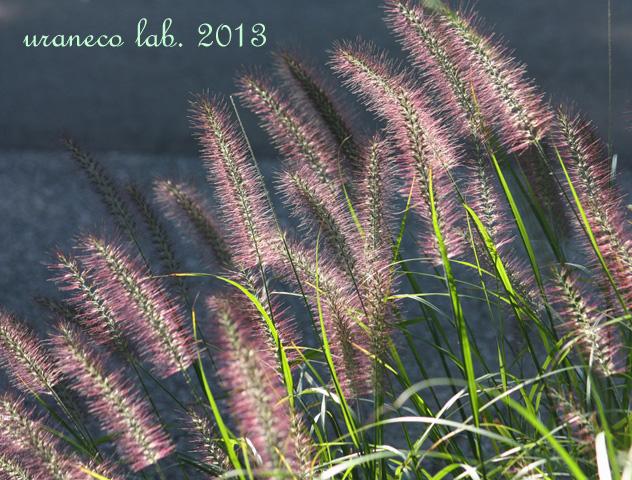 10月18日紫色のブラシ2