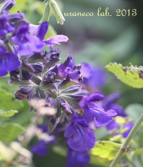 10月23日紫色のハーブ
