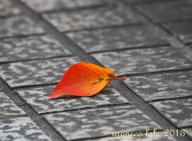 10月28日紅葉