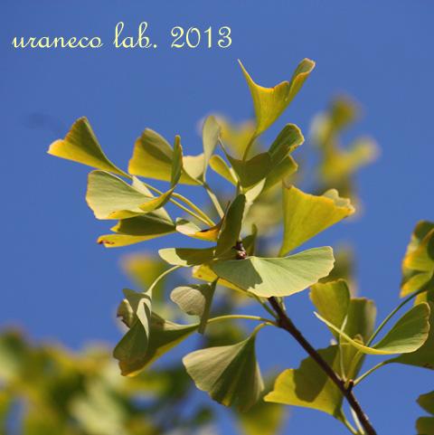 10月28日秋の空