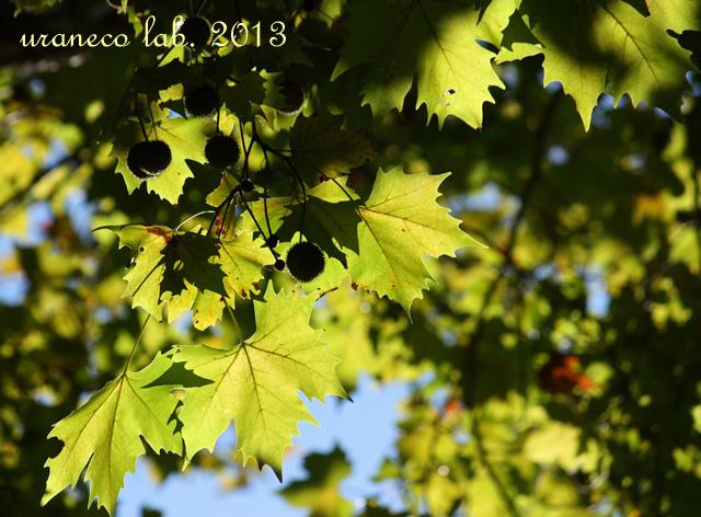 10月28日光と影 プラタナス