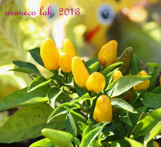 11月6日autumn yellow