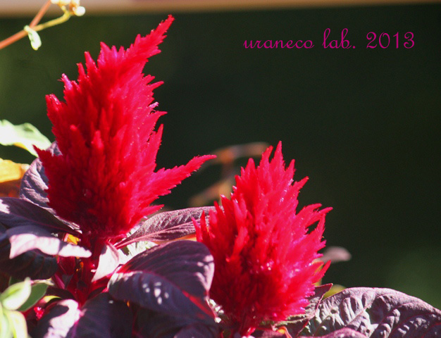 11月6日紅蓮の焔