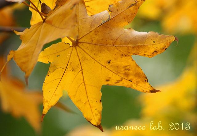 11月11日黄金色に染まる3