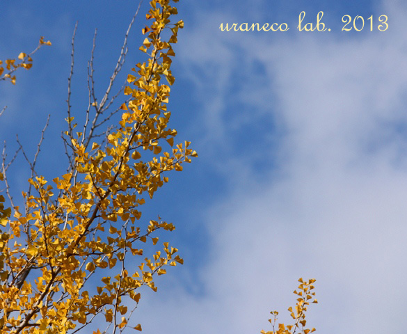 11月11日霜月の青空