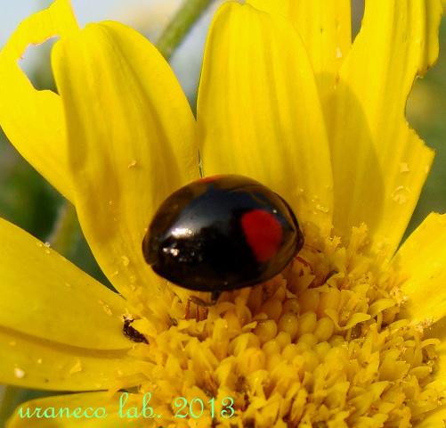11月19日黄色い花