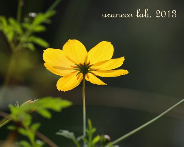 11月25日黄色い宇宙2