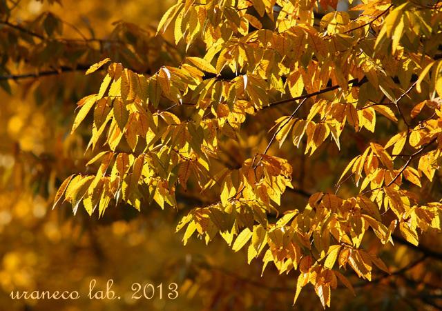 11月22日黄金色の森3