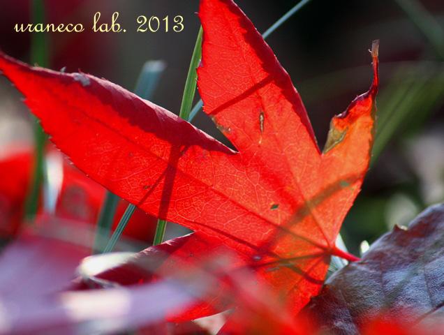 12月5日落紅葉