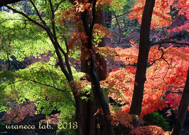12月5日Green Red