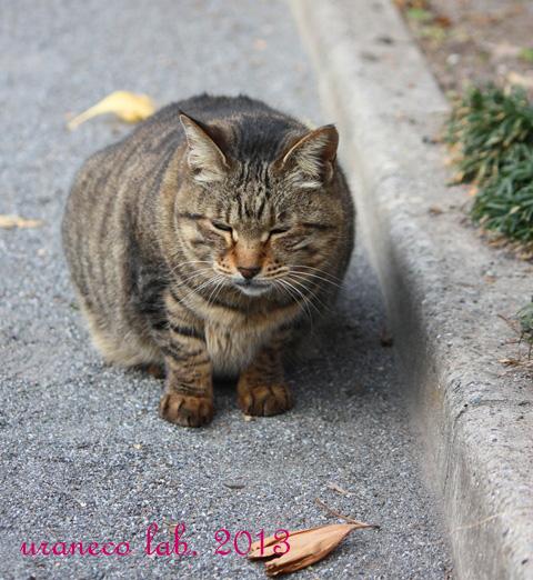 12月24日残念な猫