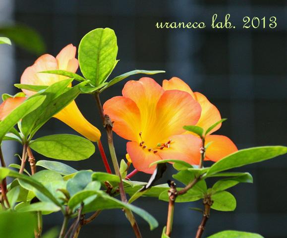 12月9日橙色